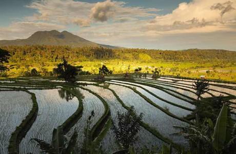 Exotisk natur på Bali