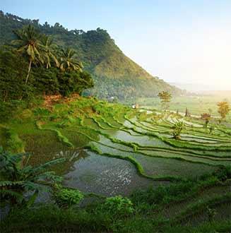 Oplev Bali - Din drømmerejse til Bali