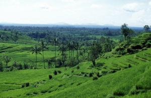 Naturen på Bali